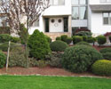 Shrub & Tree Pruning
